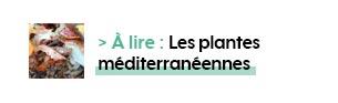> À lire : Les plantes méditerranéennes