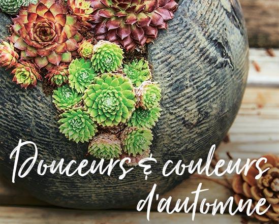 Douceurs & couleurs d'automne