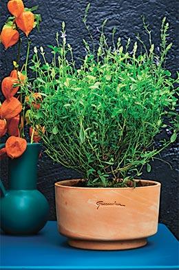 """Pot greenville """"Elho"""" Coloris vert sombre."""