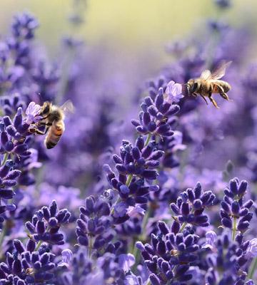 Les bienfaits des abeilles