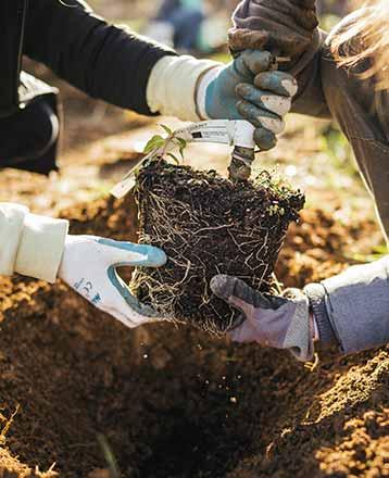 Soutenez les élèves et agricultures engagés pour la plantation des arbres