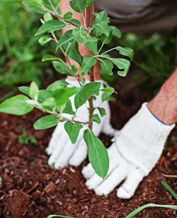 Résultat de l'opération Vous Plantez Nous Plantons