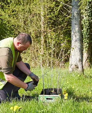 Truffaut plante des arbres en France