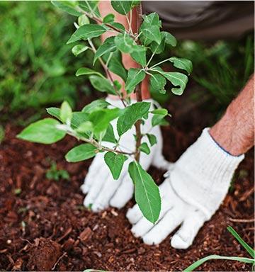 Opération « Vous plantez, nous plantons »