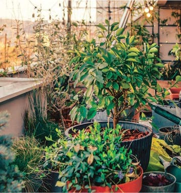 Brocante aux plantes
