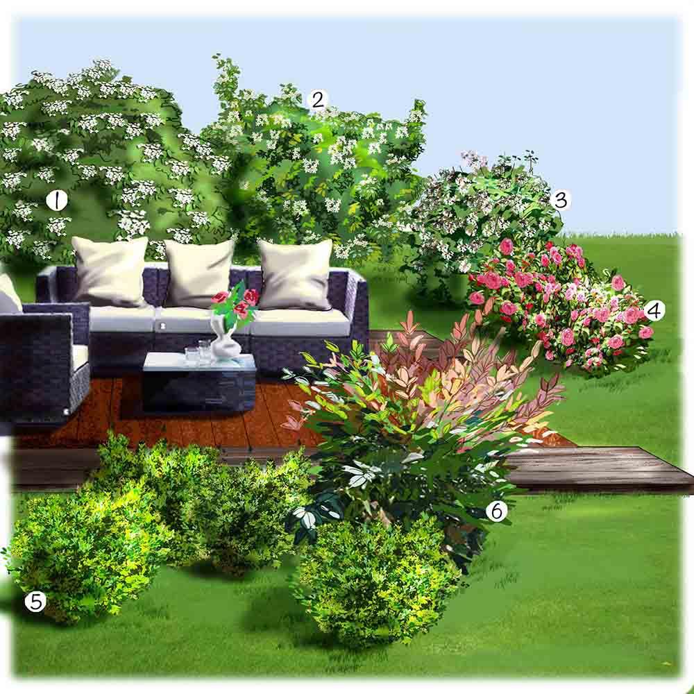 Arbre En Pot Terrasse les arbustes de la terrasse
