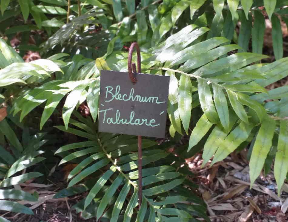 Un jardin en pente douce