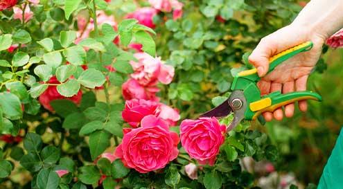 Outils de jardinage et accessoires