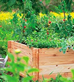 carre potager jardin