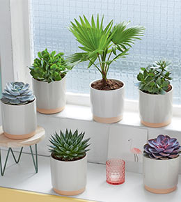 Palmier et cactus