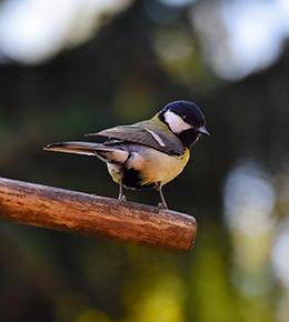 oiseaux branche