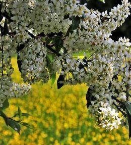 arbre ornement
