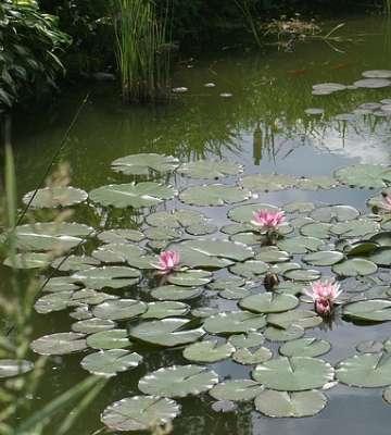 bassin naturel au jardin