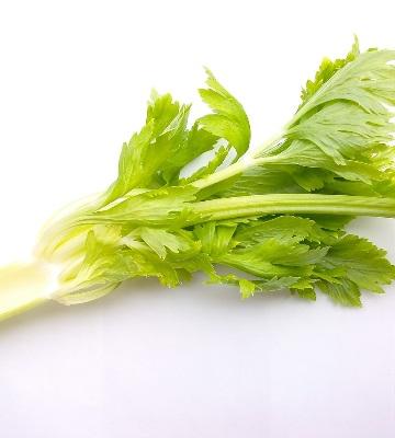 celeri branche