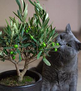 chat plante