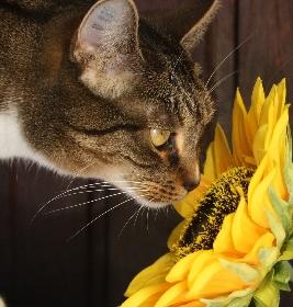 toxicité des plantes pour le chat