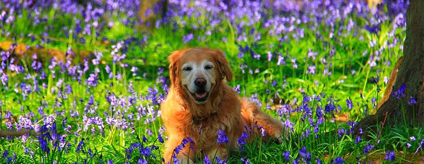 chien fleurs