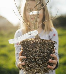 arbre a planter