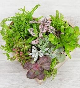 composition succulentes