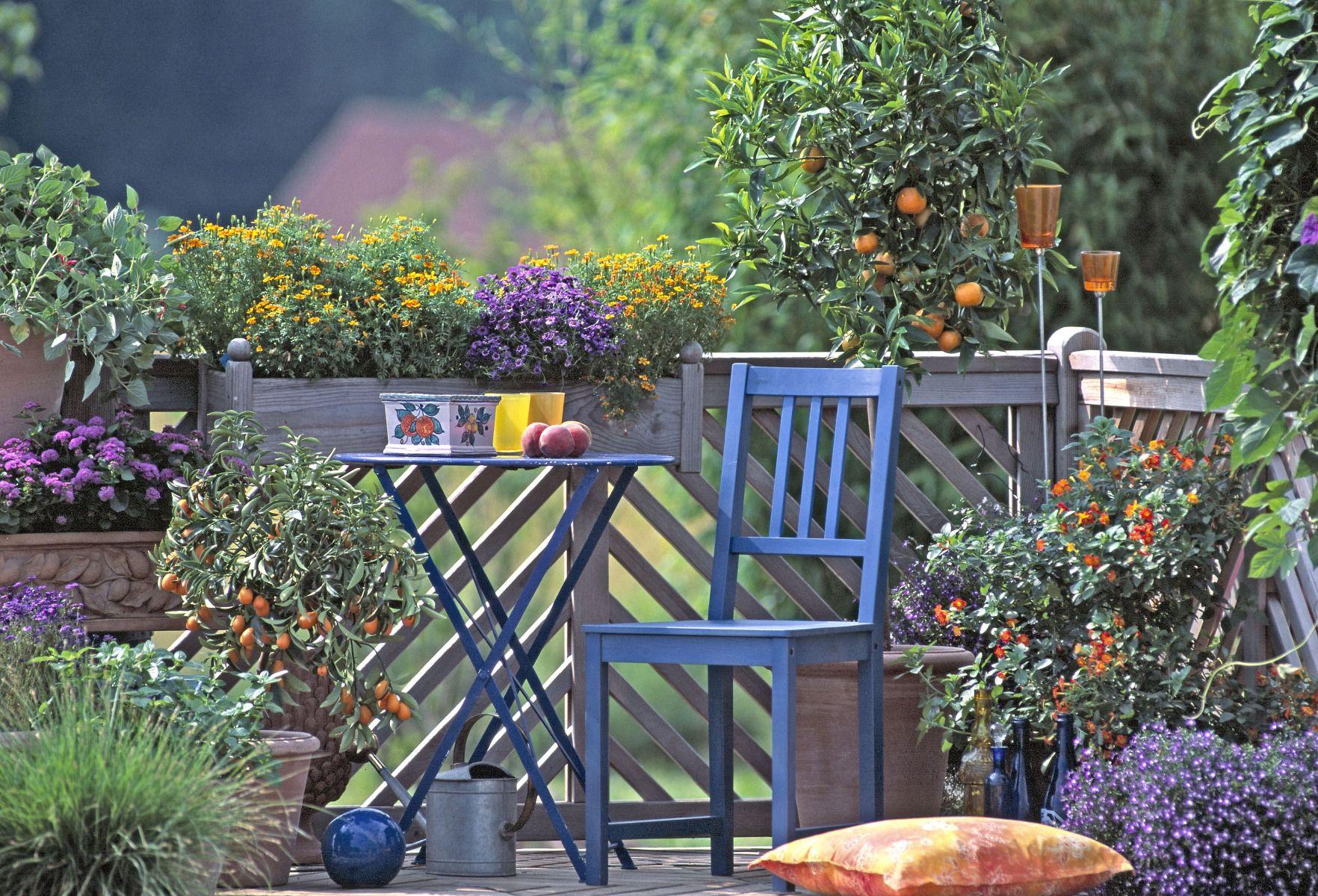 Arbre Fruitier En Pot Interieur arbre fruitier nain : créez votre verger de poche