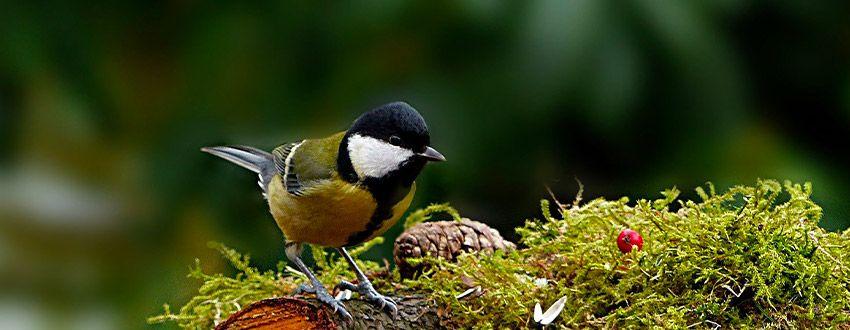 oiseau du jardin
