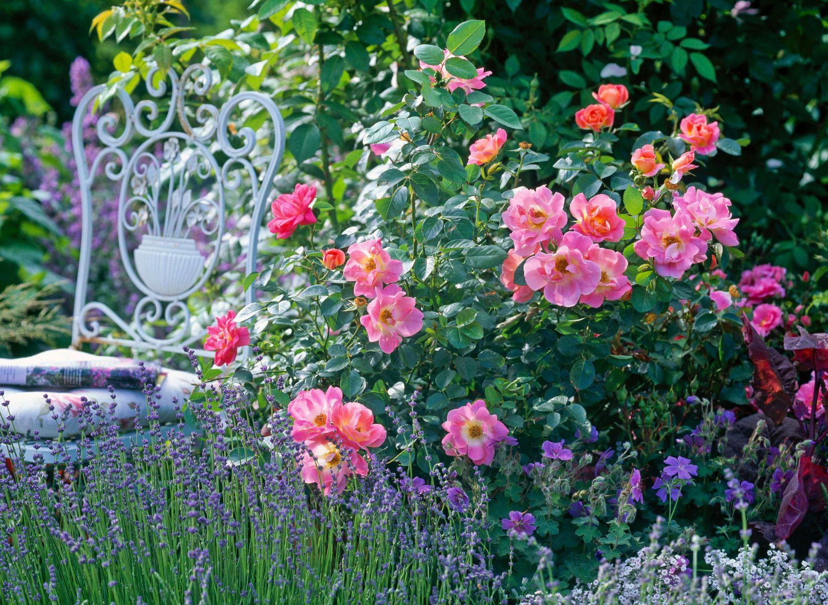 Bac Pour Arbuste De Jardin 5 idées de plantes à associer au rosier