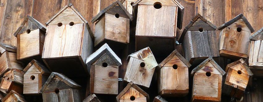 cabane en bois oiseaux