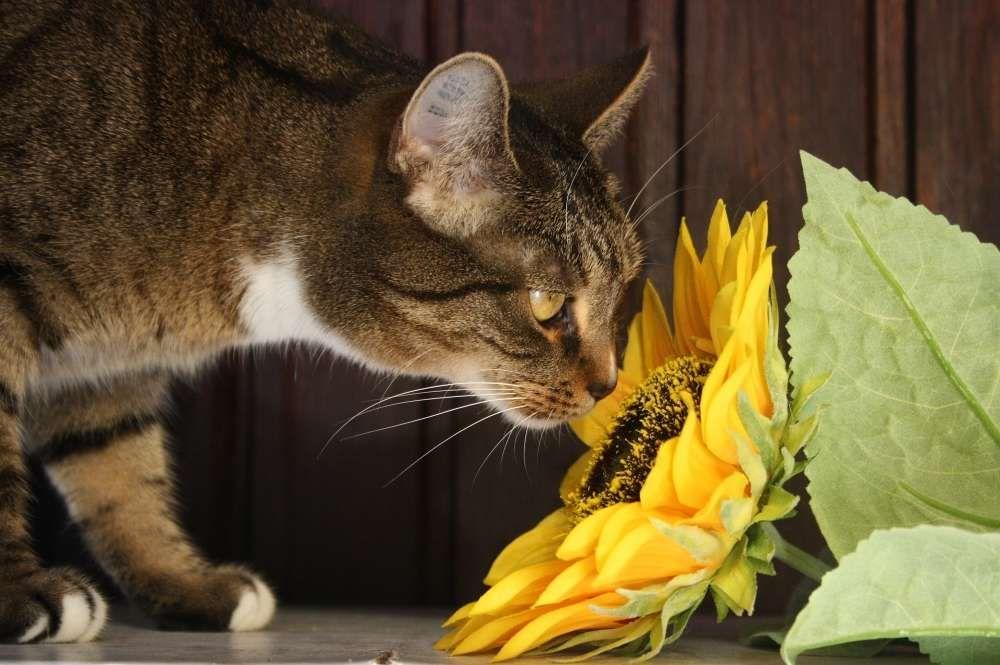 plantes toxiques pour le chat
