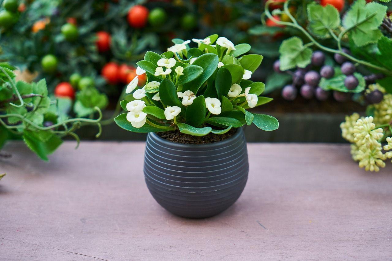 Petites Plantes Fleuries En Pot comment choisir ma plante d'intérieur ?