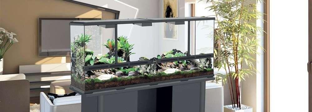 choix d'un terrarium en fonction du reptile