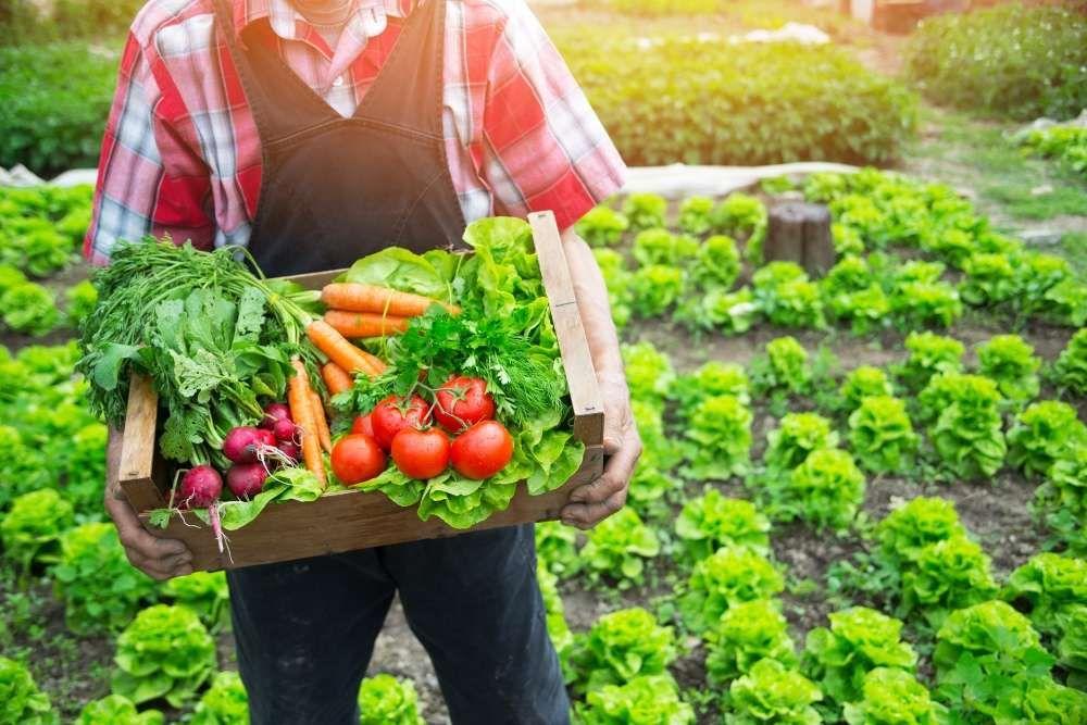 legumes potager bio