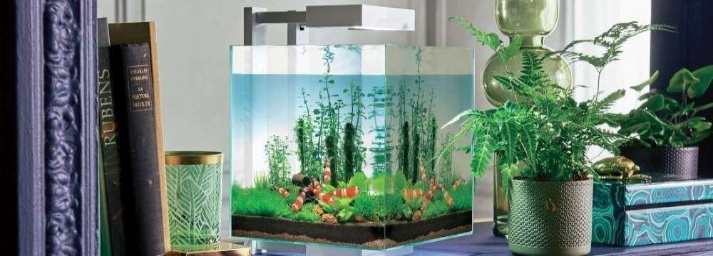 nano aquarium crevettes eau douce
