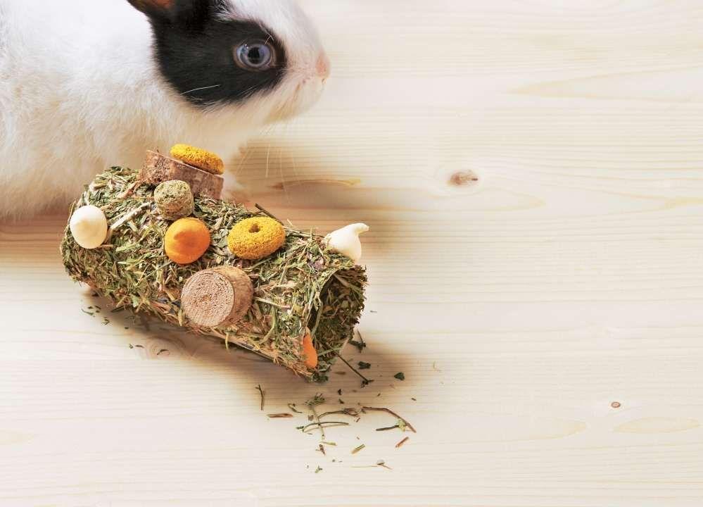 friandise pour lapin