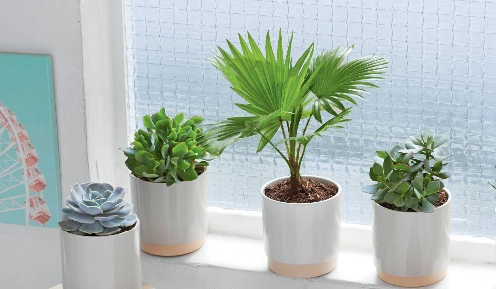 palmiers et succulentes interieur