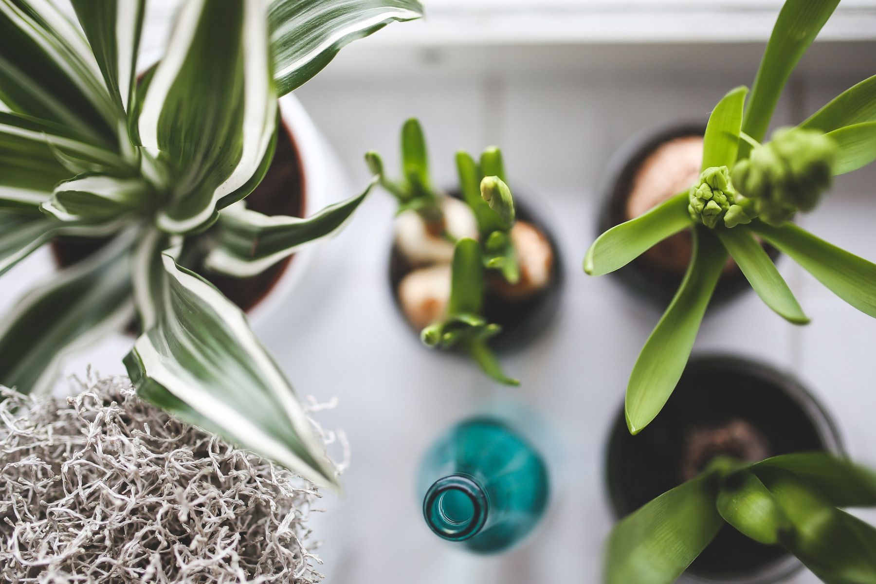 entretenir plante interieur