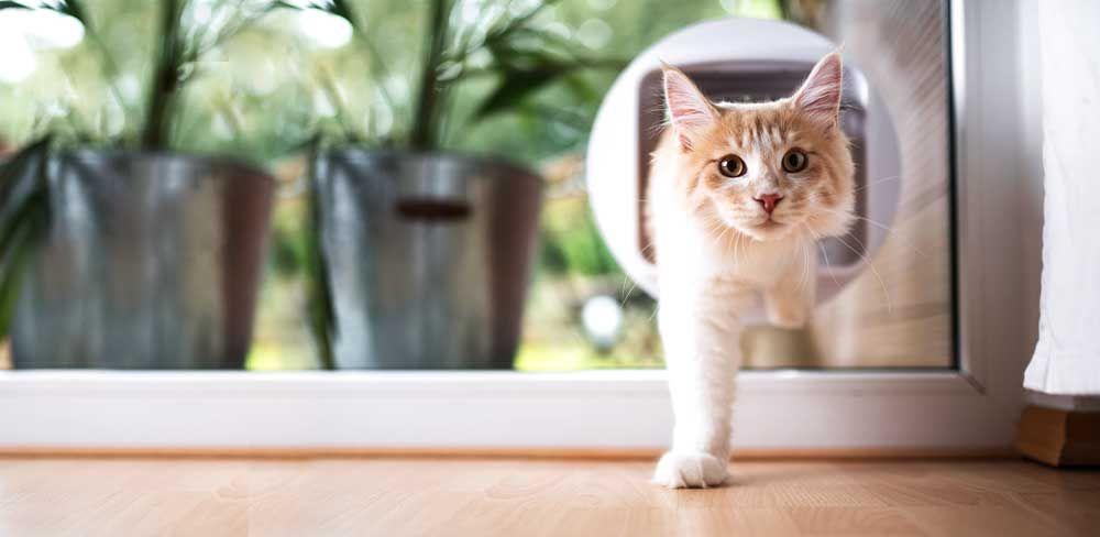 Comment installer une chatière