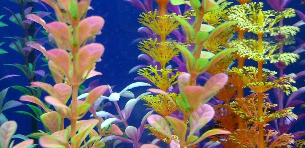 Comment créer et entretenir un aquarium en aquascaping ?