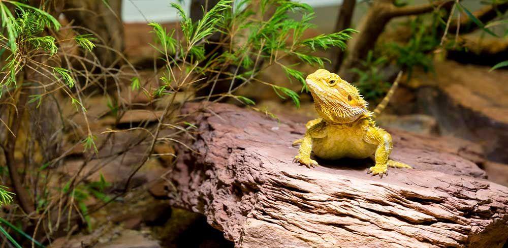 Un terrarium respectant la nature du reptile