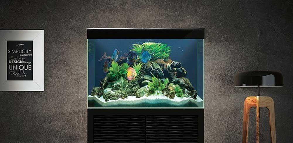 Incontournable en aquariophilie : le poisson néon