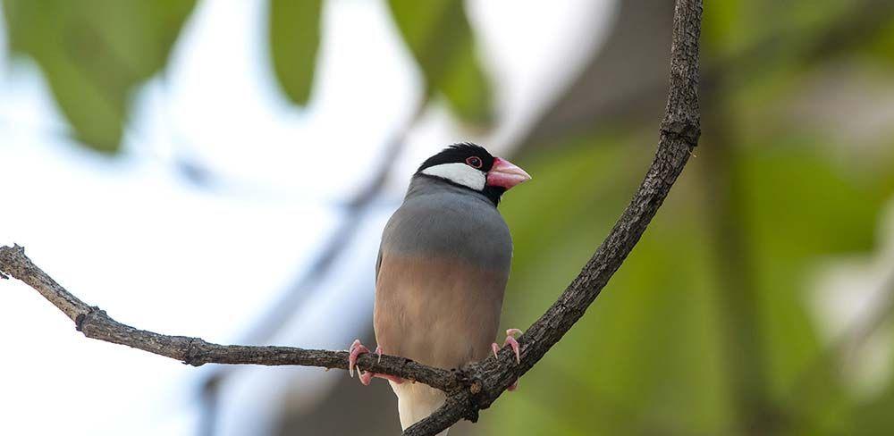 Choisir son oiseau exotique à adopter
