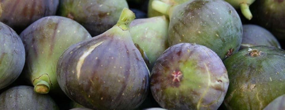 figuier fruits