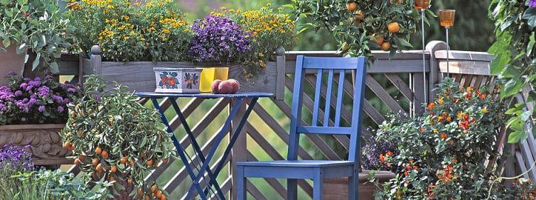 fruitiers pour balcon