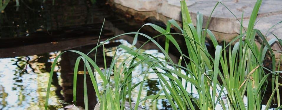 installation bassin