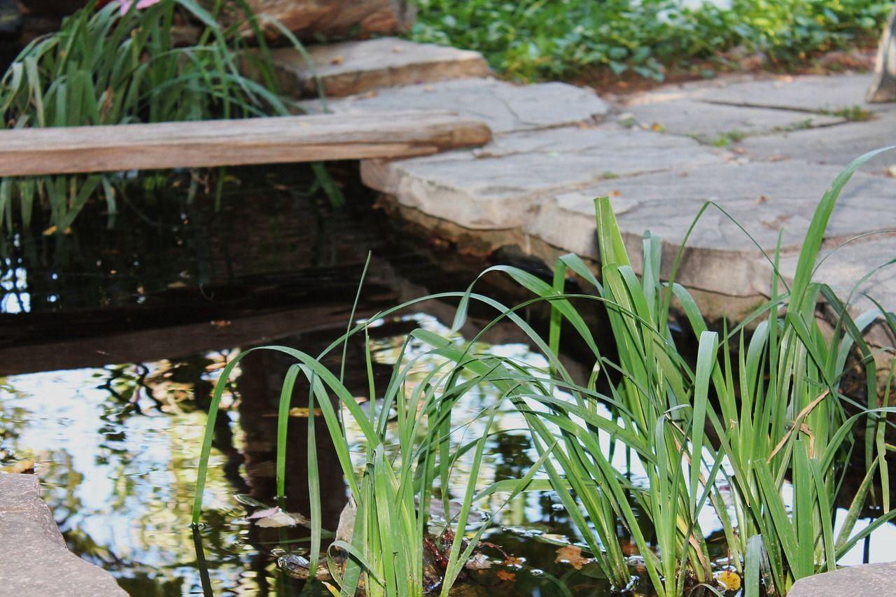 Comment Faire Un Petit Bassin Aquatique comment installer une bâche pour bassin ?