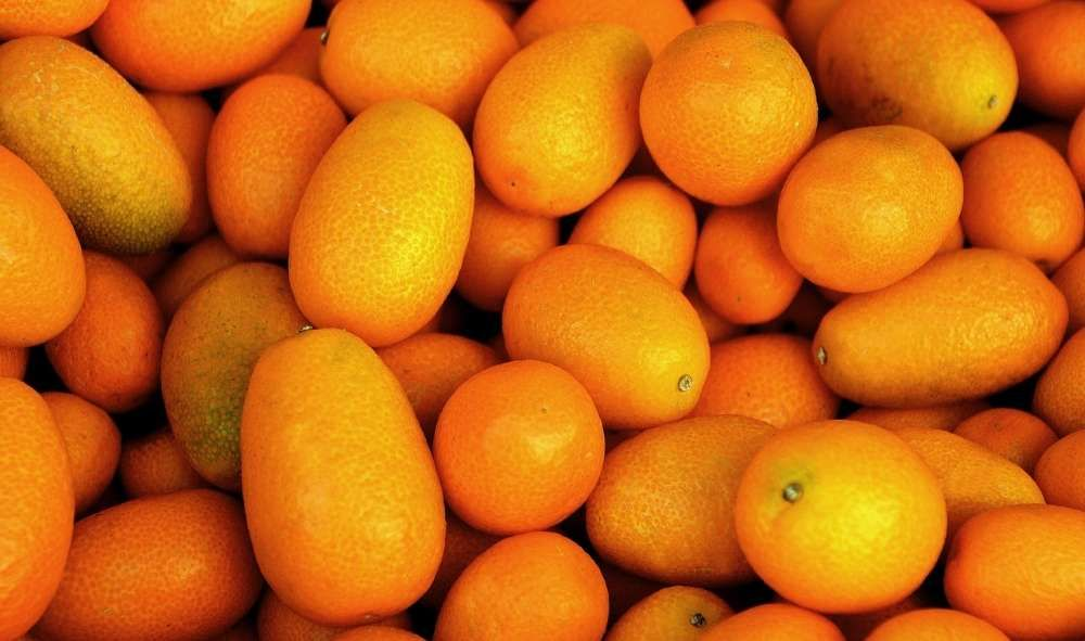 arbre fruitier kumquat