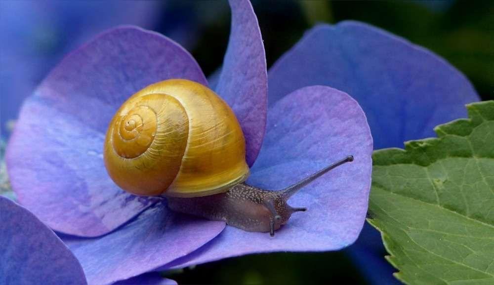 luttre contre les nuisibles escargots
