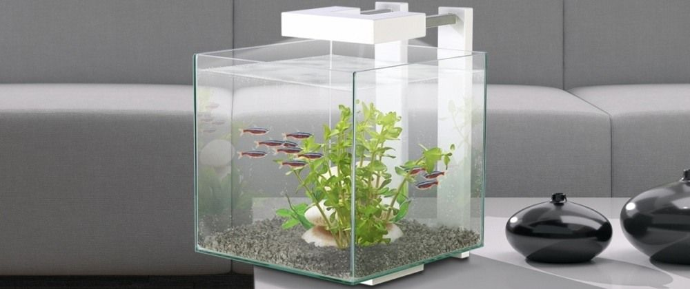 poisson nano aquarium