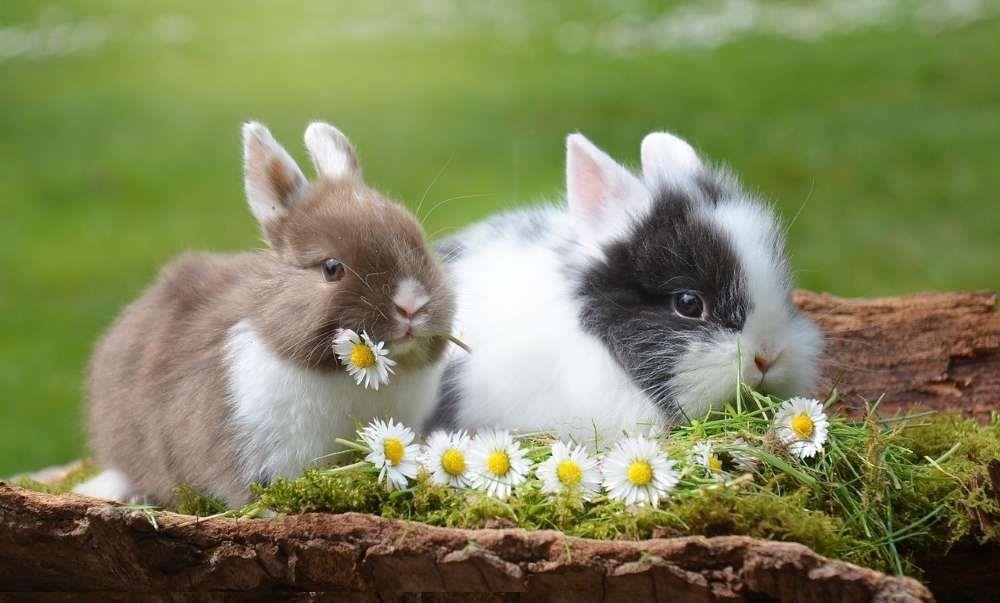 comment nourrir les lapins