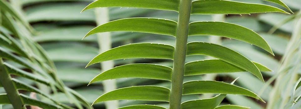 palmier interieur