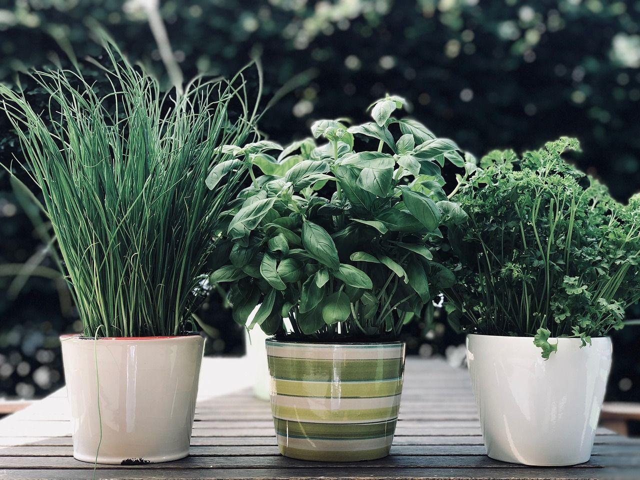 Planter Herbes Aromatiques Jardiniere quelles plantes aromatiques choisir ?